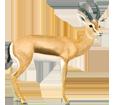 Gazelle dorcas ##STADE## - robe 20