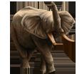 Eléphant adulte - robe 16022