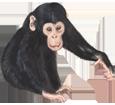 Chimpanzé ##STADE## - robe 69