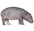 Hippopotame ##STADE## - robe 52