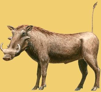 Recueillir un animal de la savane d'espèce phacochère