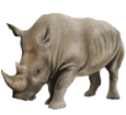 Rhinocéros ##STADE## - robe 52
