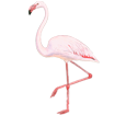 Flamant rose ##STADE## - robe 68