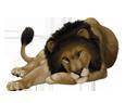 Lion ##STADE## - robe 16019