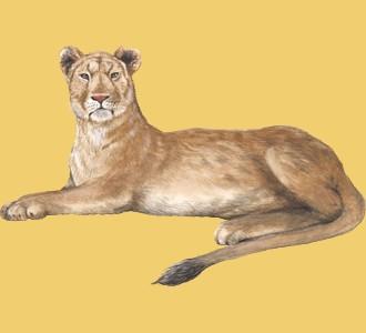 Recueillir un animal de la savane d'espèce lion