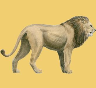 Lion ##STADE## - robe 2