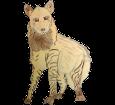 Hyène rayée adulte - robe 1000000034