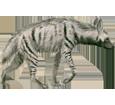 Hyène rayée adulte - robe 9