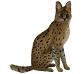 Serval adulte - robe 46