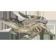 Crocodile bébé - robe 66