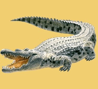 Recueillir un animal de la savane d'espèce crocodile
