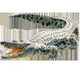 Crocodile ##STADE## - robe 66
